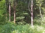 Коттеджный посёлок Морозов 11