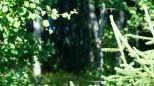 Коттеджный посёлок Сосновый аромат 7