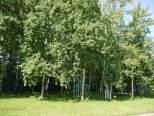 Коттеджный посёлок Чистые пруды 20