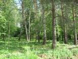 Коттеджный посёлок Сосновый бор 1